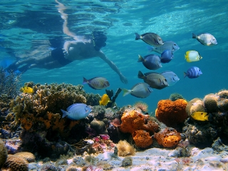 Snorkeling on Grace Bay, Providenciales Car Rentals